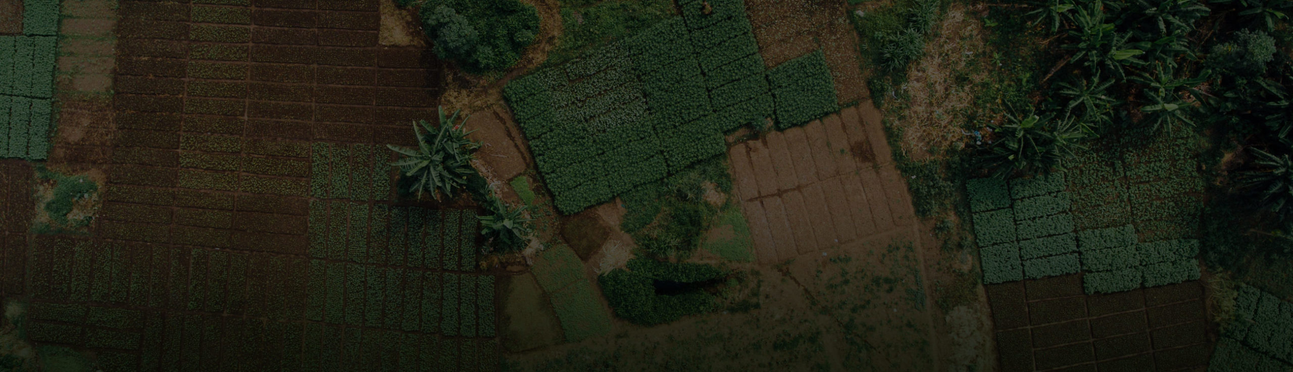 Aerial view of smallholder farm in Africa showing plantation plots for various crops