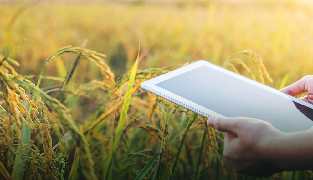 Tablet device in the hands of a data scientist over the crops of a smallholder farm in Africa