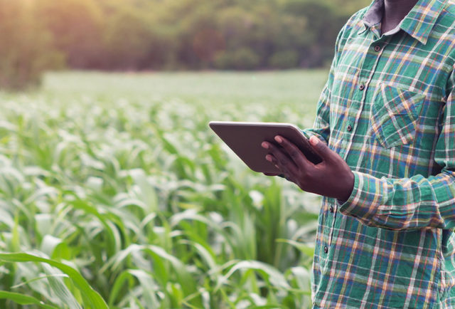 African farmer standing in a green field holding a tablet device